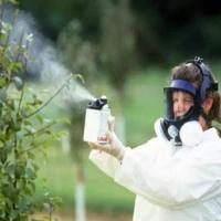 Чем полить дерево, чтобы оно засохло