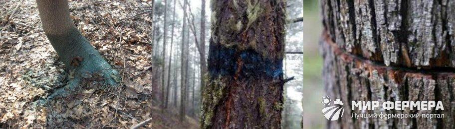Обработка коры дерева