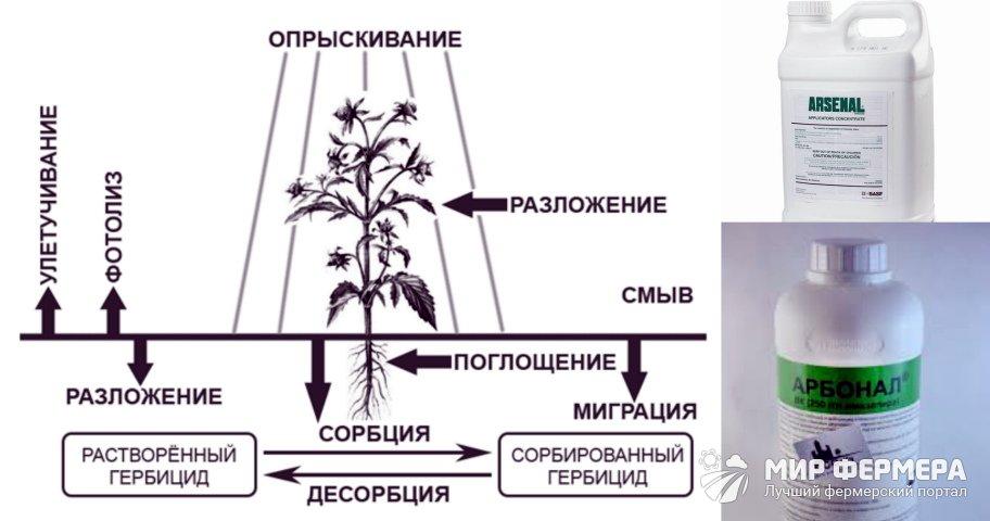 Арборициды виды