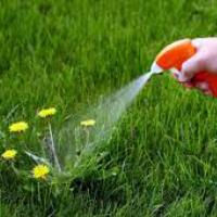 Газонная трава которая уничтожает сорняки чем засеять участок готовые смеси
