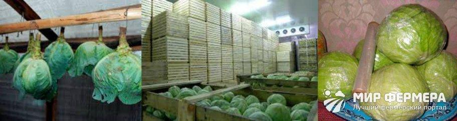 Хранение свежей капусты