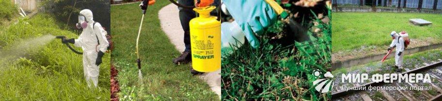 Как использовать гербицид Граунд