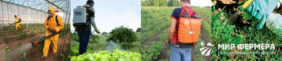 Обработка сорняков гербицидом