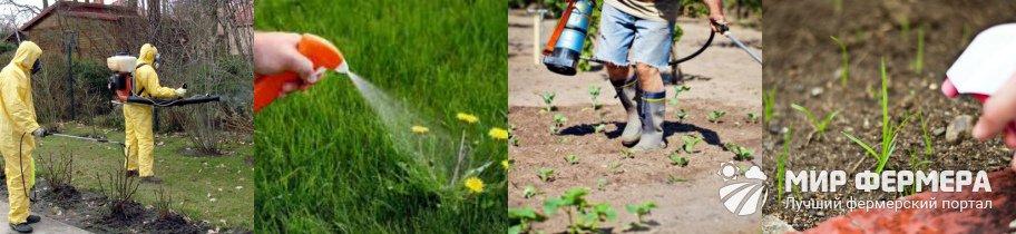 Как использовать гербицид Отличник