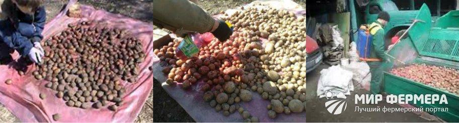 Обработка картофеля Престижем