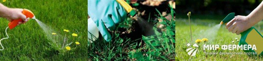 Как использовать уксус от сорняков