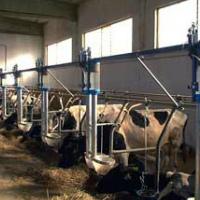 Коровник на 5 коров: схема и размеры