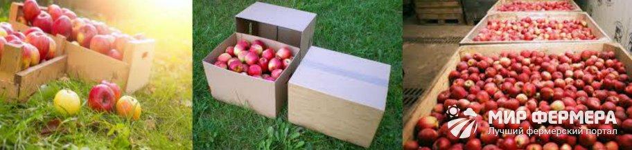 Хранение яблок в картонных коробках
