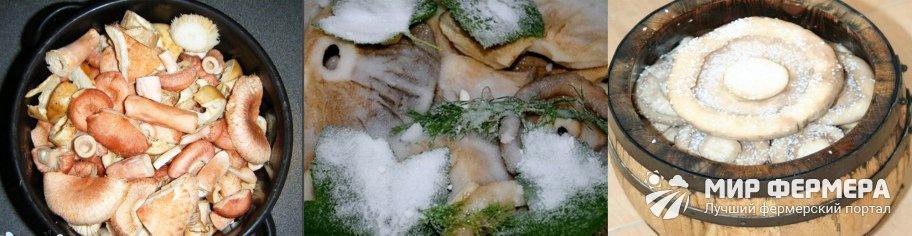 Как солить грибы холодным способом