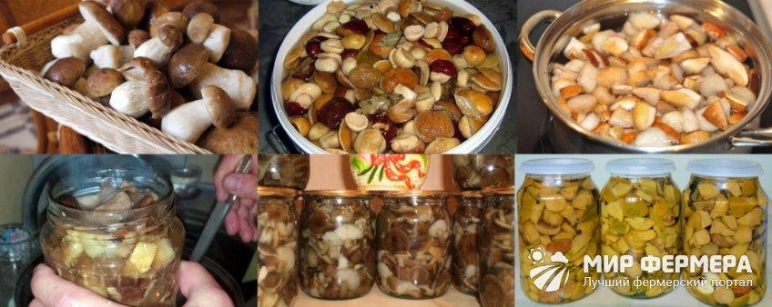 Засолка грибов в домашних условиях