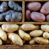 Как хранить картошку в погребе зимой