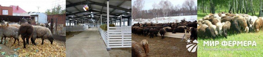 Содержание эдильбаевских овец