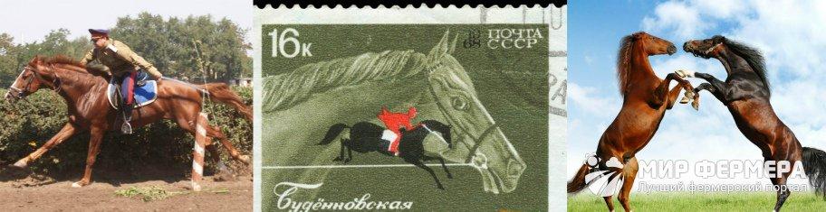 Буденновская лошадь история