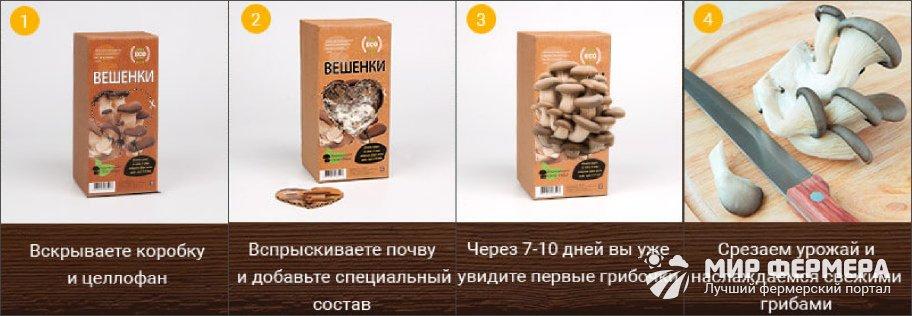 Как пользоваться грибной коробкой