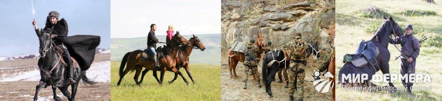 Карачаевская порода лошадей сегодня