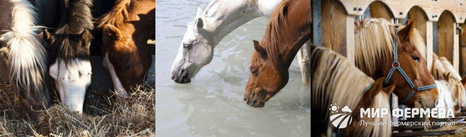 Особенности кормления лошадей