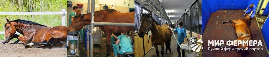 Как понять, что лошадь заболела