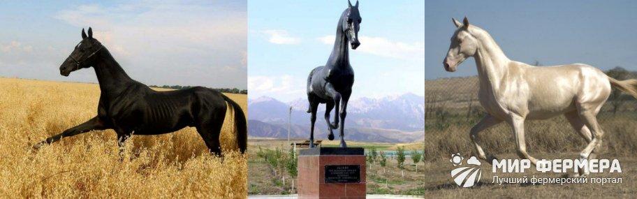 Ахалтекинская порода лошадей