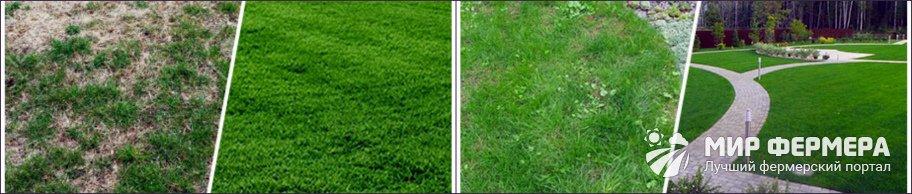Как применяется жидкий газон