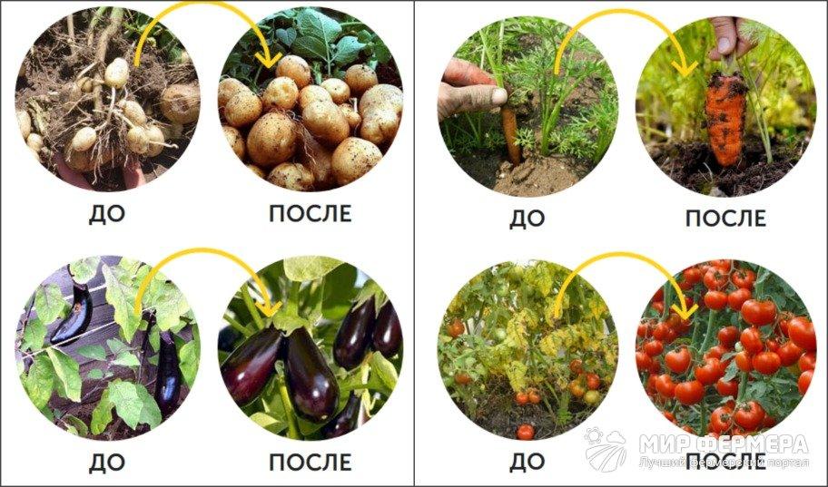 Удобрение AgroMax полезные свойства