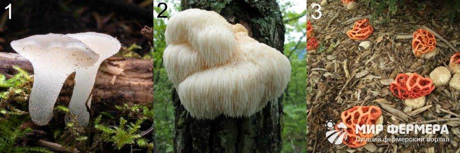 Редкие грибы фото и описания