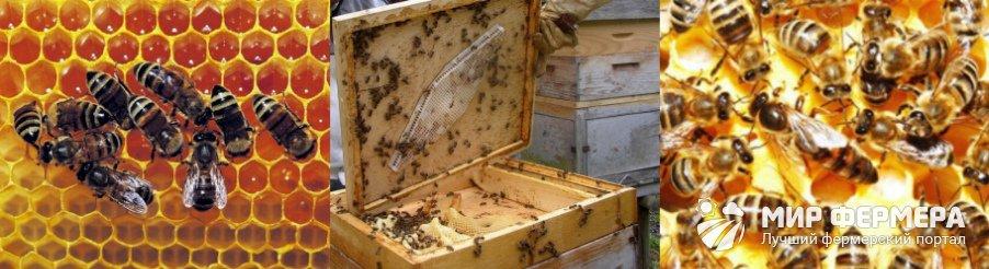 Как продлить жизнь пчелы