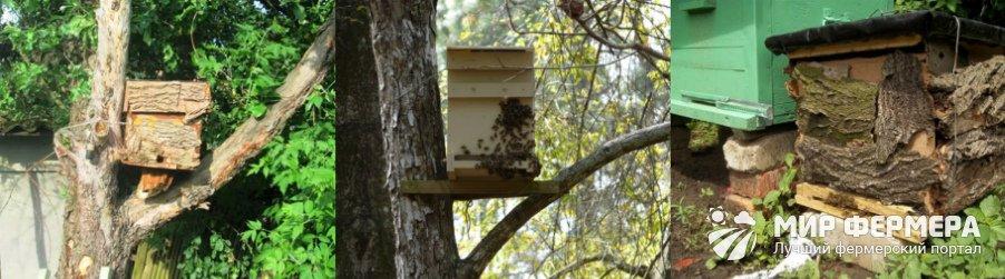Ловушка для пчел фото