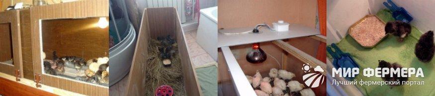 Брудеры для цыплят фото