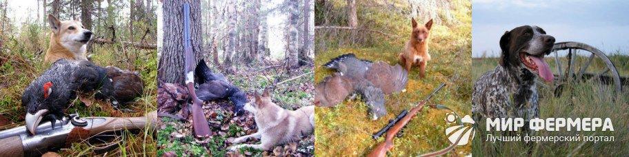 Охота на глухаря с собакой