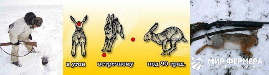 Как охотиться на зайца