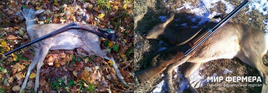 Как охотиться на косулю зимой
