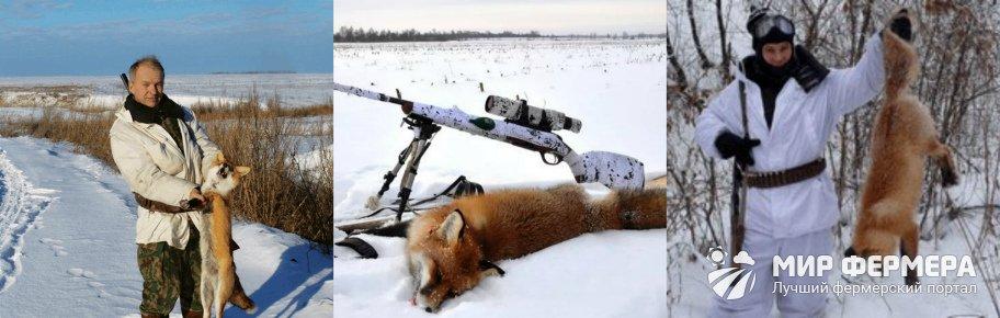 Сезон охоты на лису