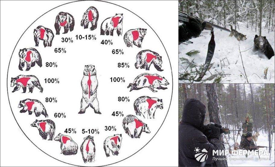 Как убить медведя