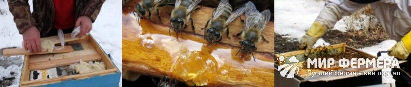 Подкормка для пчел на зиму