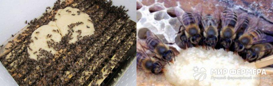 Подкормка канди для пчел