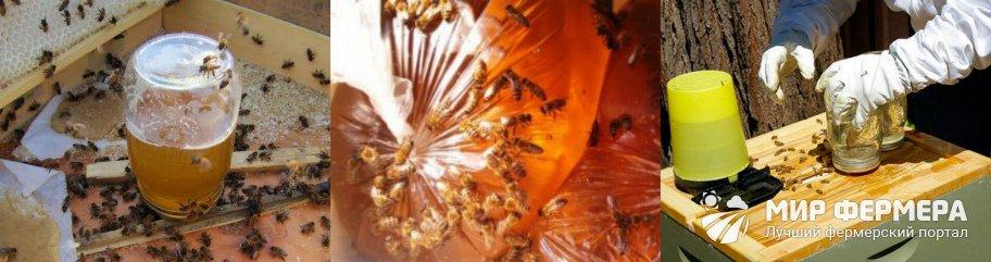 Подкормка пчел сиропом