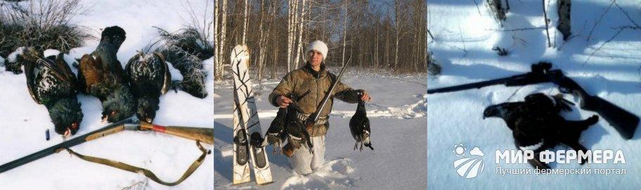 Как охотиться на тетерева зимой