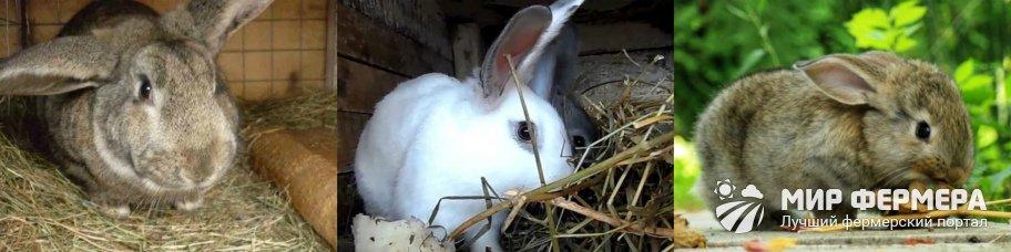 Грубые корма для кроликов