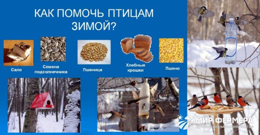 Зачем подкармливать птиц зимой