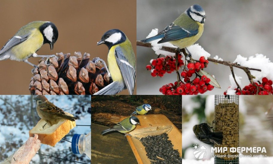 Чем можно подкармливать птиц