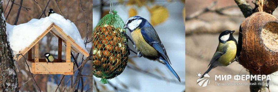 Как подкармливать птиц зимой