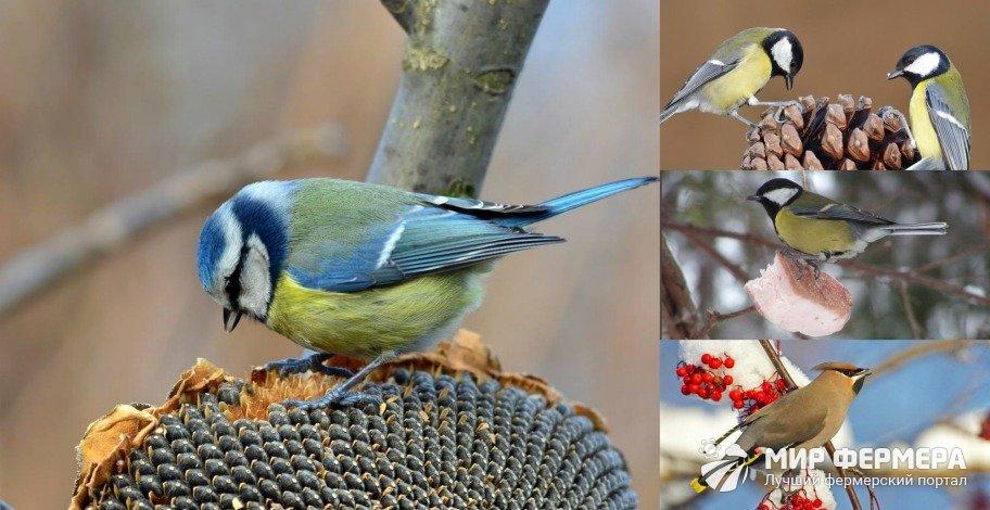 Лучшие корма для птиц