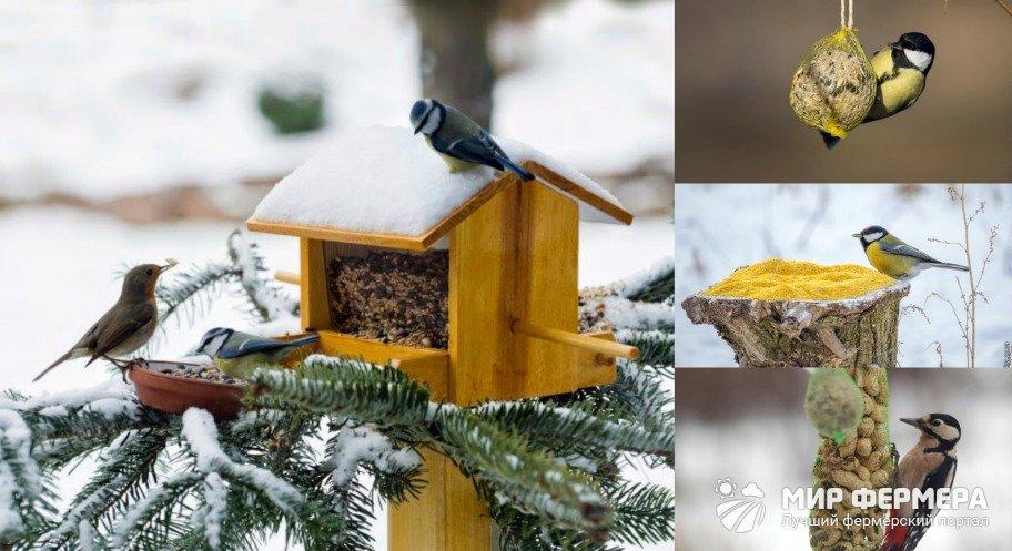 Подкормка птиц в лесу