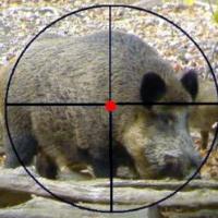Особенности охоты на кабана в осенний период