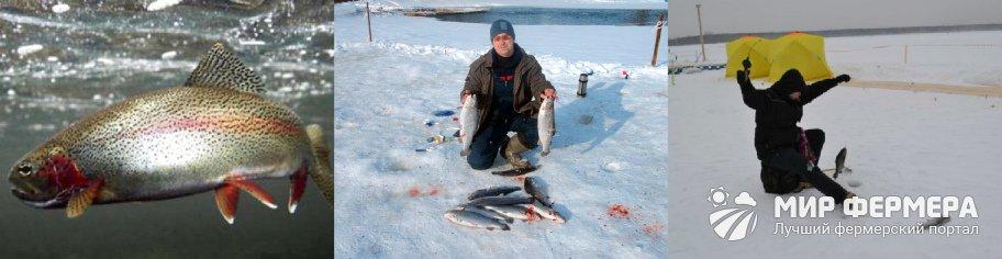 Платная рыбалка на форель