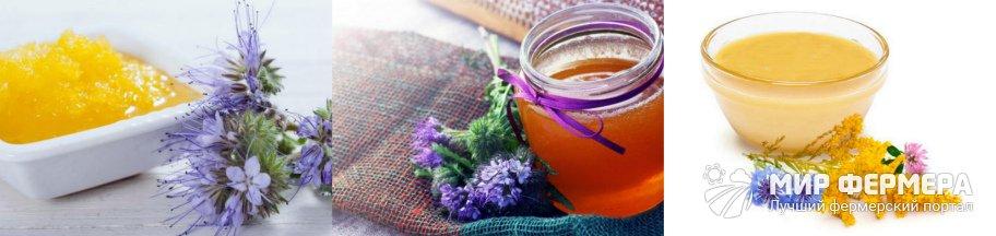 Фацелиевый мед как выглядит