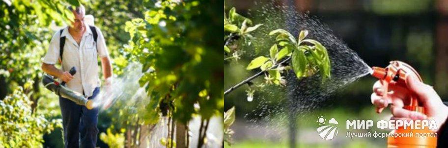 Бордосская смесь для винограда