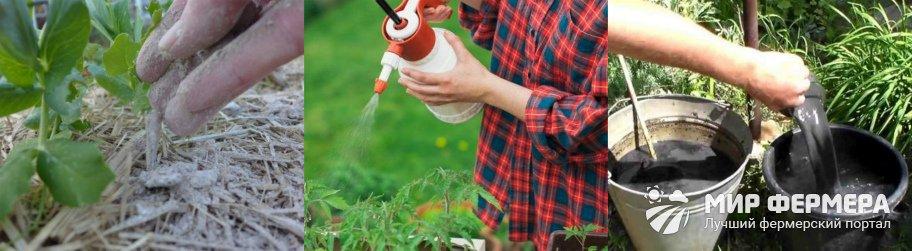 Как использовать золу на огороде