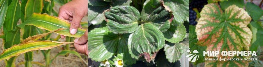 Недостаток удобрений у растений