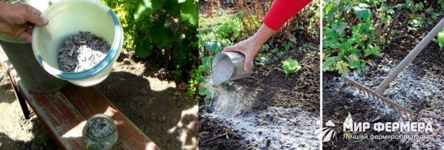 Польза золы для огорода